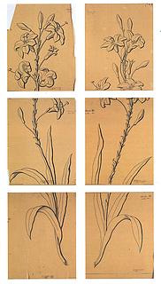 H.C. From: Skitser til vinduesudsmykningen, liljeranker