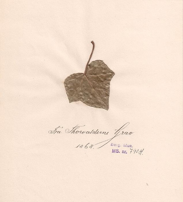 Blad fra Thorvaldsens grav