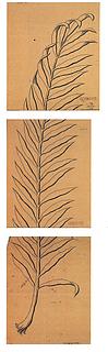 H.C. From: Skitse til vinduesussmykningen, palmegren