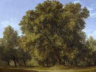 Et skovparti