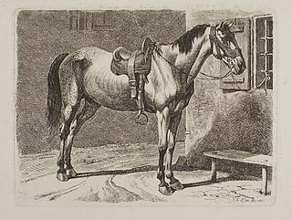 Hest bundet til et vindue