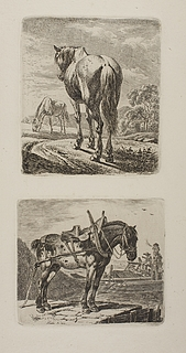 Heste på en mark. Hest ved en flodbred