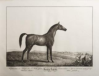 Koylan