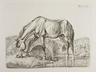 Hest på en åbred