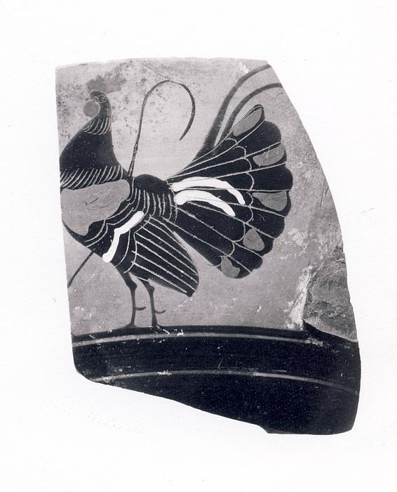 Kyathos med en hane. Græsk