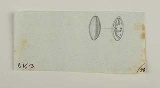 Udekoreret ryg. Hieroglyf-signet