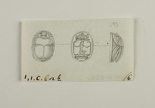 Skarabæ fra ryg, bug og i profil