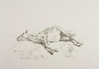 Død hest