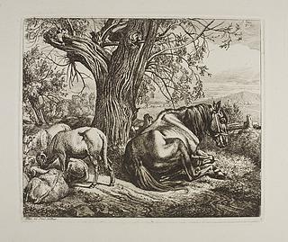 Hest og får hviler under et piletræ