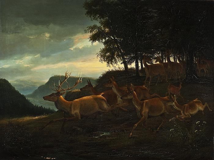 Hjort i skovbrynet