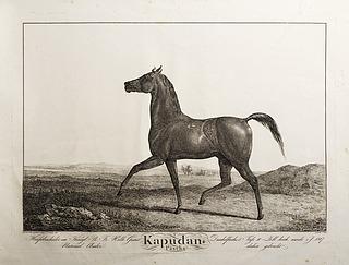 Kapudan Pascha